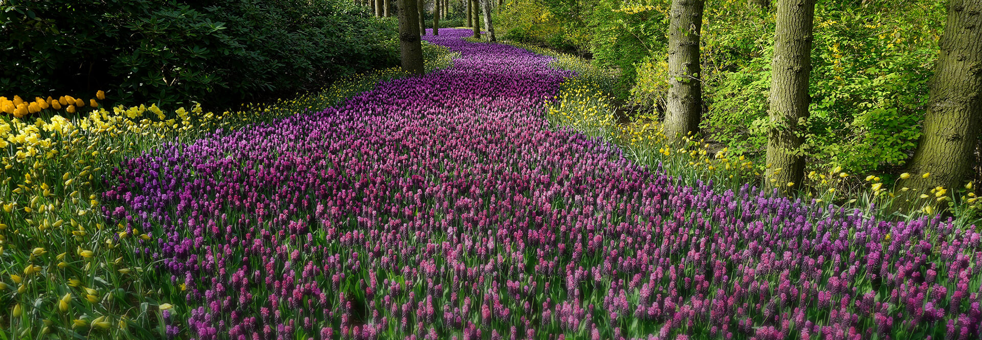 The Compassionate Gardener background